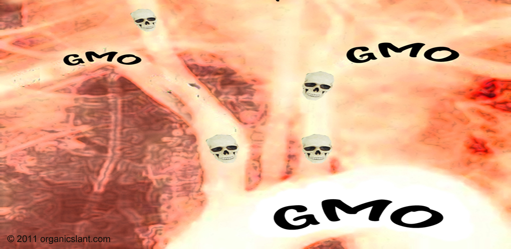 toxin-from-gm-crops-found-in-blood-study-1024w