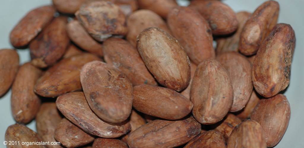 chocolate-not-equal-to-beneficial-cocoa-1024w