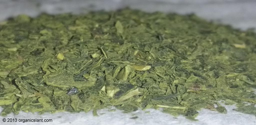 discover-moringa-superfood-treasure-1024w