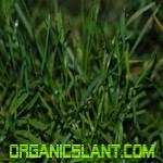 benefits-of-organic-lawn-care150w