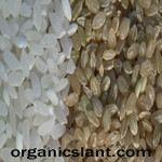 hot-rice-brown-rice-vs-white-rice-radiation-content-150w