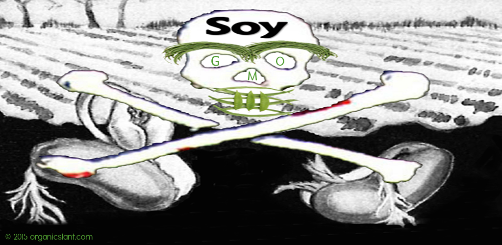 gmo-soy-accumulates-formaldehyde-disrupts-plant-metabolism-suggests-peer-reviewed-study1024w