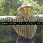 Scientists disappointed at results from GM wheat field trial
