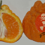 Radioactive Cesium From Fukushima Is Still Being Detected In Florida Citrus And Other Plants