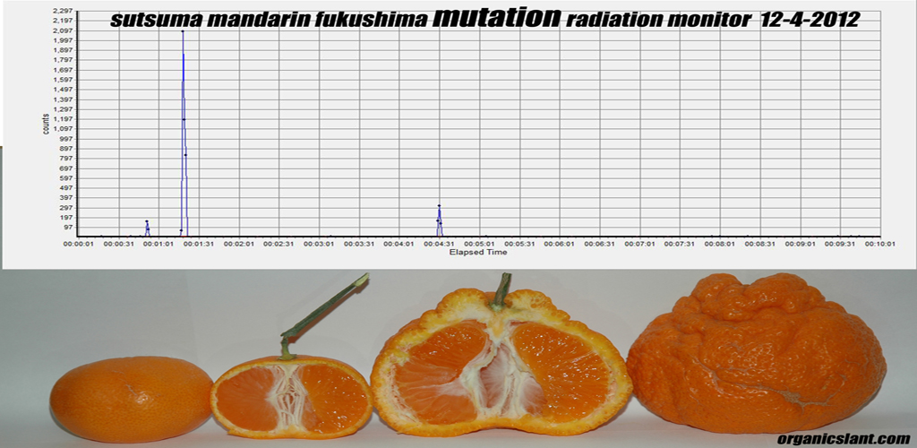 radioactive-cesium-from-fukushima-is-still-being-detected-in-florida-citrus-and-other-plants-mandarin
