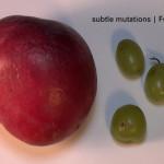subtle-mutations-fukushima