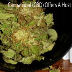 Cannabidiol (CBD) Offers A Host Of Medicinal Uses