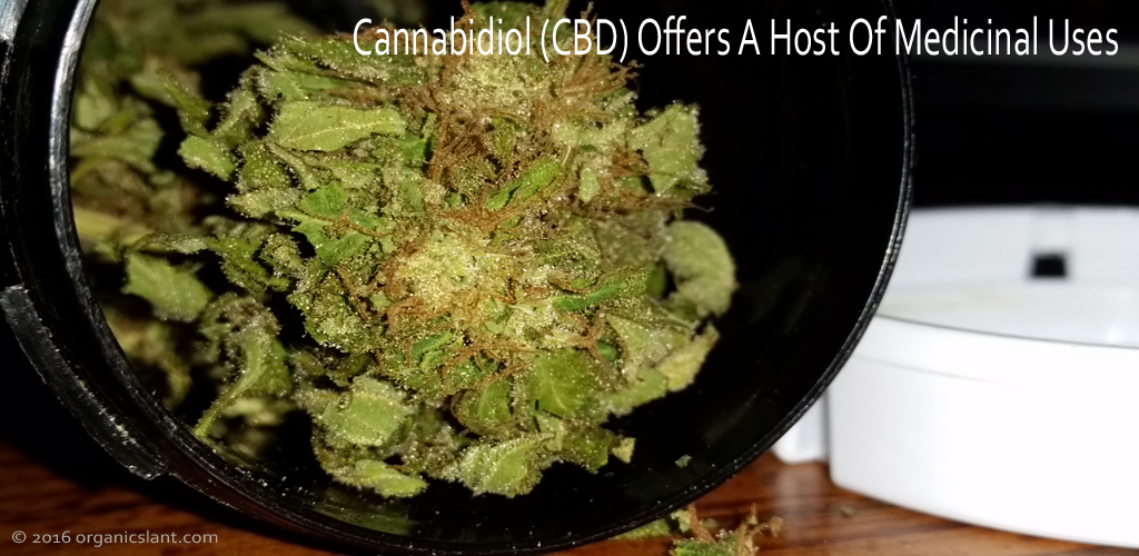 cannabidiol-cbd-offers-a-host-of-medicinal-uses-title