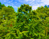 synthetic-forests-and-the-dangers-of-genetically-engineered-trees-1024w