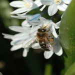 57 Different Pesticides Found In Poisoned Honeybees