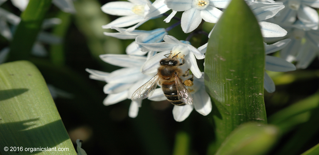 57-pesticides-found-in-poisoned-honeybees-1024w
