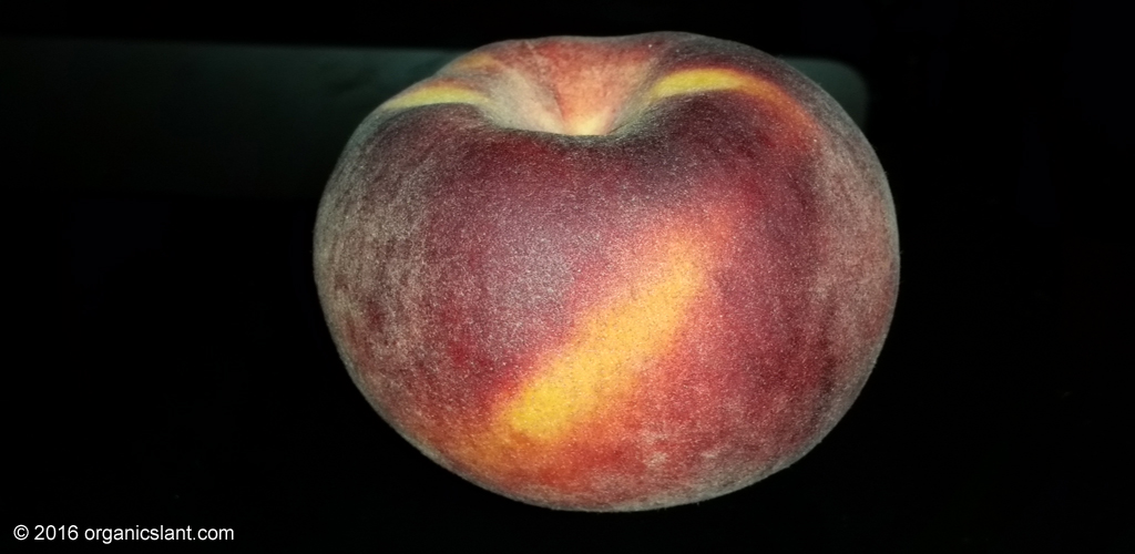 peaches-inhibit-breast-cancer-metastasis-in-mice-1024w