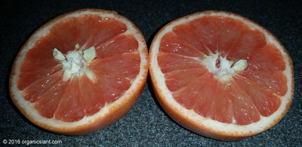 grapefruit-juice-stems-weight-gain-in-mice-fed-a-hig-fat-diet-1024w