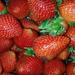 Organic Strawberry Farms Produce More Flavorful And Nutritious Berries