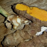 Curry And Curcumin — Turmeric Offers Potential Therapy For Oral Cancers