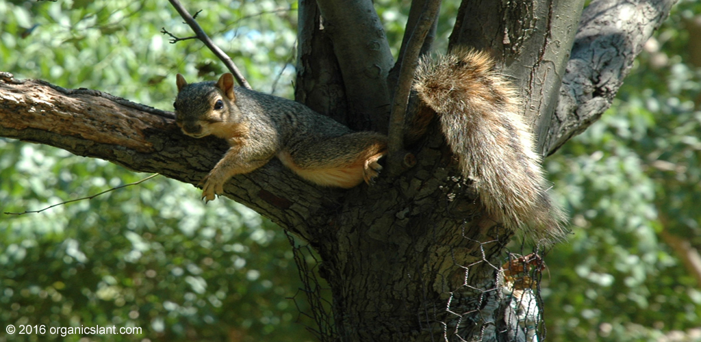 red-squirrels-in-the-british-isles-are-infected-with-leprosy-bacteria-1024w