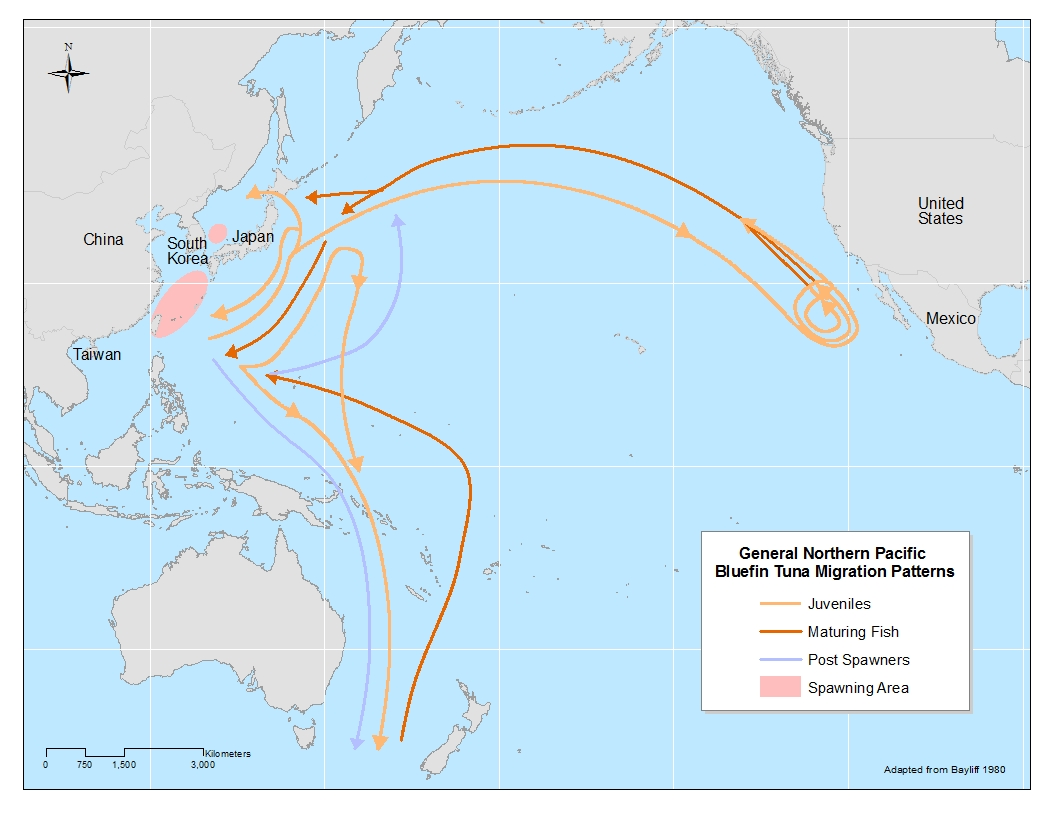 fukushima-radiation-is-constantly-increasing-and-is-steadily-building-up-in-our-food-chain-map