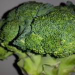 Broccoli May Be Good For The Gut