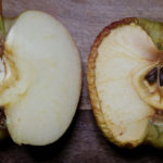 GMO Apples That Don't Brown Hit US Stores