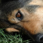 Study finds glyphosate in cat and dog food
