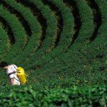 France takes Roundup weed-killer off market after court ruling